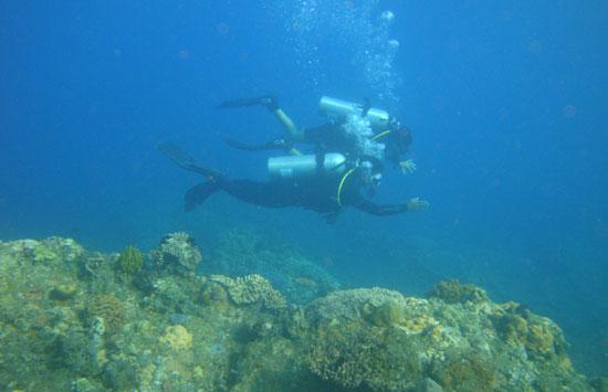 KEINDAHAN: Semakin dalam menyelam, kian beraneka ragam ikan dan terumbu karang yang terlihat di Desa Penuktukan, Buleleng, Bali. (Eka Prasetya/Radar Bali)