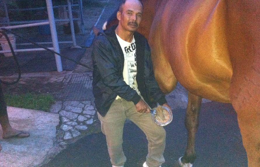 PROFESI LANGKA: Ece Dail Falahudin di kompleks peternakan kuda di Bandung pekan lalu. Dia enjoy menjalani profesi yang masih dipandang sebelah mata itu. (M. Amjad/JPNN)