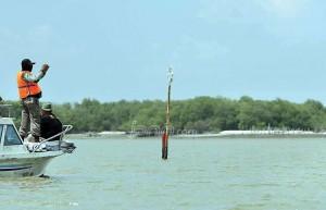 081915_145821_mangrove
