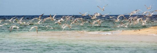 burung_laut_laut