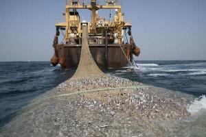 Foto kapal trawl yang bisa menguras ikan seenaknya di laut Indonesia diunggah Menteri Susi Pudjiastuti di akun Twitternya, Rabu (28/1). Foto: Twitter