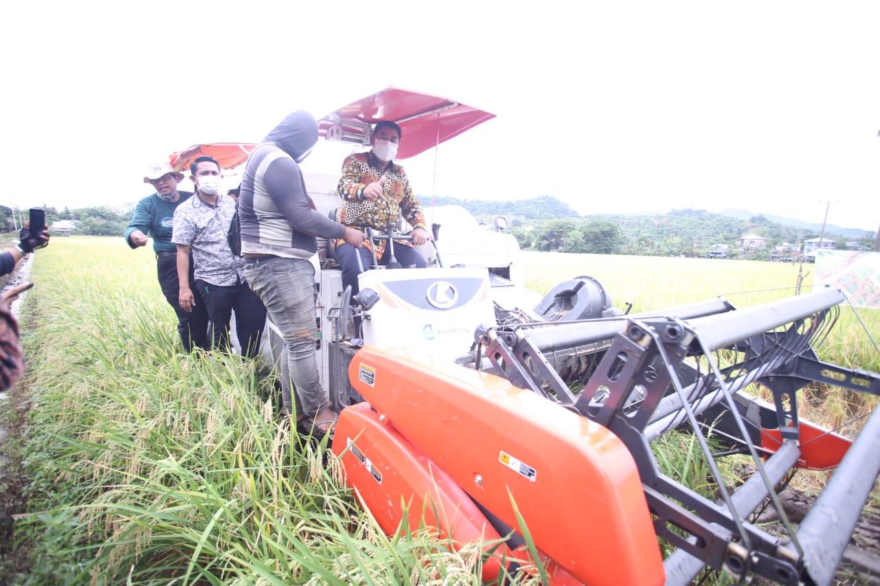 Dukung Pemanfaatan Lahan, Abdul Hayat Panen Perdana Padi Varietas M70D