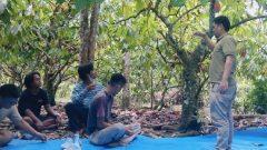 Mahasiswa PUMD Posko Kalimbua-Lulusan IPB Bikin Sekolah Lapang Kakao